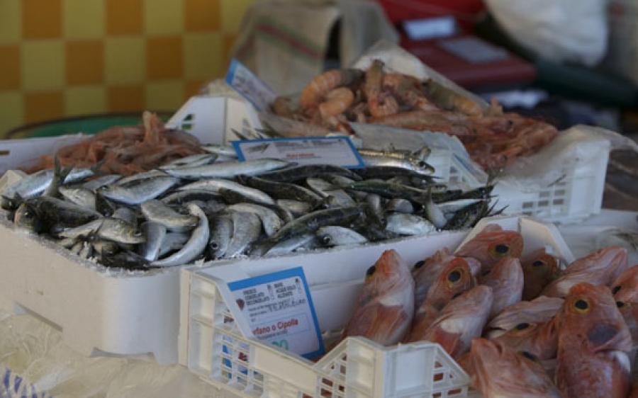 Rilevatore dati socio economici della flotta da pesca