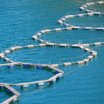 Summary of the 2013 Economic Performance Report on the EU Aquaculture Sector (STECF 13-30)