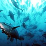 The 2013 Annual Economic Report (AER) on the European Union (EU) fishing fleet (STECF 13-15)
